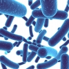 The Truth Behind Probiotic Supplements